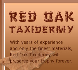 Red Oak Taxidermy Pricing, Madison Wi area, based in Belleville WI